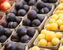 WP-Fruit-620x400