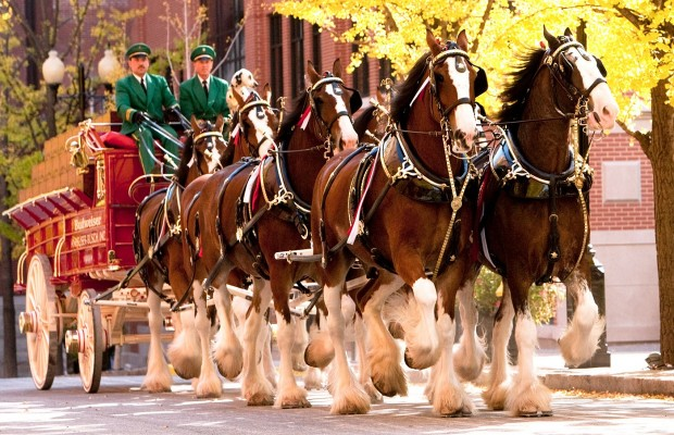Daily Clydesdale Parade Time Changed