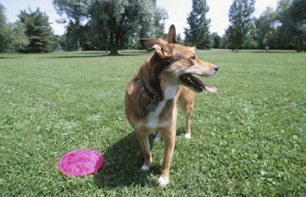 Washington Park Dog Area Gets Public Hearing