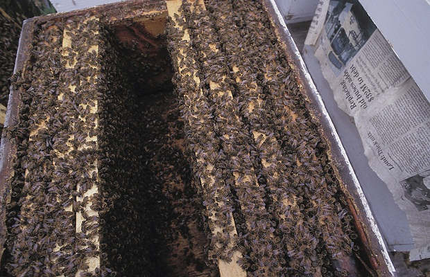 Beekeepers Reeling After Harsh Winter, Cool Spring