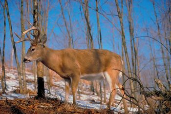 Changes for Deer Hunters